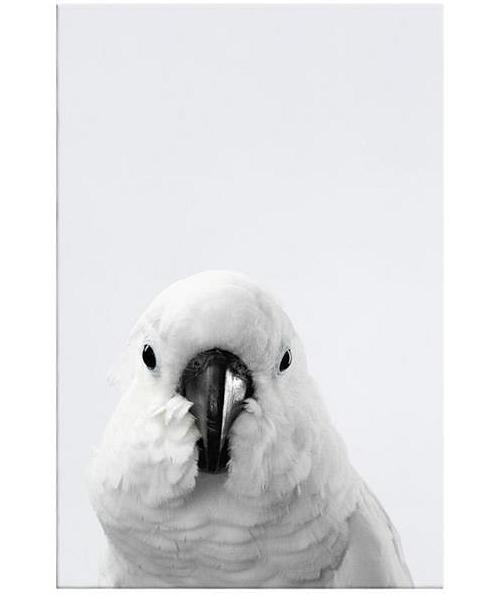 The Yellow Crested Cockatoo Print Canvas