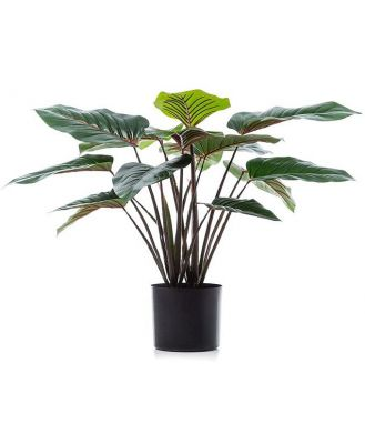 Home Republic Potted Plants   Red Philodendron 60cm - Redphilodendron60Cm By Adairs