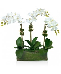 Diane James Home Phalaenopsis Faux Floral Orchids